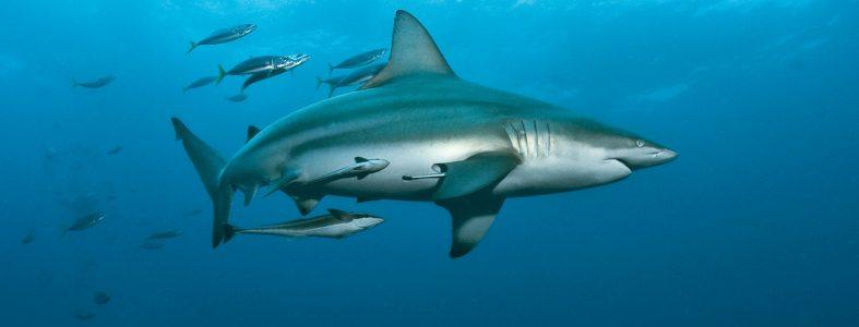 shark9426--w-2