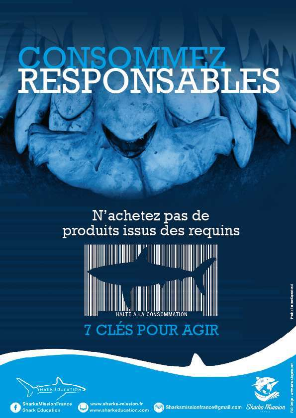 brochure requin jpeg